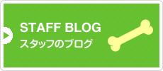 STAFF BLOG スタッフのブログ